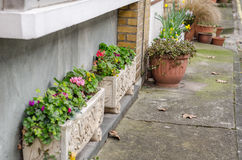 Colorful flowers in pots in front of the building, two rectangul Royalty Free Stock Image