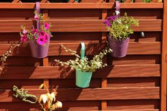 Colorful flowers in pots hung on a wooden fence Stock Images