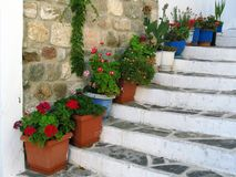 Colorful Flowers in Pots, Naxos Stock Images