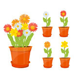 Colorful flowers in pots Royalty Free Stock Image