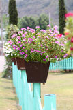 Colorful flowers on potted plants. Royalty Free Stock Images
