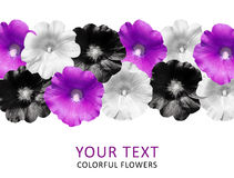 Colorful flowers in a row isolated on white background. Mallow. Bright flowers. View top Stock Photography