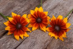Colorful flowers rudbeckia on an old wooden Stock Photo