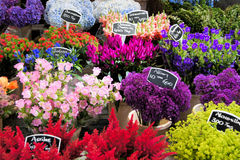Colorful flowers for sale. Flowers for sale at a Dutch flower market, Amsterdam, The Netherlands Stock Images