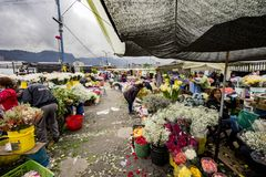 Flower Market in Paloquemao Bogota Colombia Royalty Free Stock Photos