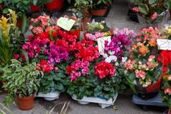 Colorful flowers from a shop Stock Images