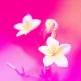 Colorful flowers in soft color and blur style for background Royalty Free Stock Photos