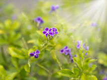 Colorful flowers with solar beams Stock Image