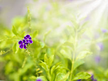 Colorful flowers with solar beams Stock Images