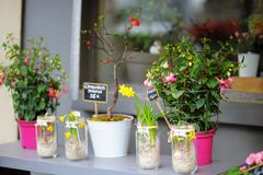 Colorful flowers sold on outdoor flower shop Royalty Free Stock Photo