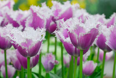 Colorful flowers in spring Royalty Free Stock Photos