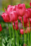 Colorful flowers in spring Stock Image