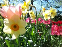 Colorful flowers in spring afternoon sunlight royalty free stock photos