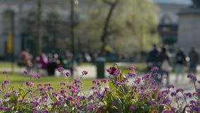 Colorful flowers in spring city park, people hanging out and walking in the background stock video footage