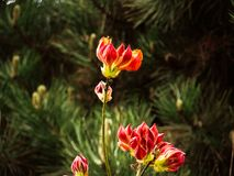 Colorful flowers in the spring forest. Flowers in the spring forest. Very special view Stock Photo