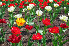 Colorful flowers in springtime. Stock Image