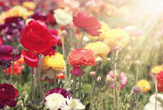 Colorful flowers sunlight Royalty Free Stock Photo