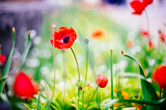 Colorful flowers in sunny garden
