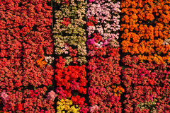 Colorful flowers texture background Royalty Free Stock Image