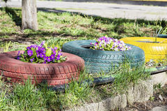 Colorful flowers in tire pots Royalty Free Stock Image
