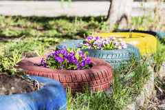 Colorful flowers in tire pots Royalty Free Stock Photo