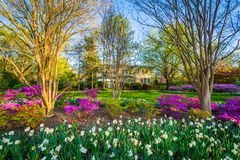 Colorful flowers and trees at Sherwood Gardens Park in Guilford, Baltimore, Maryland royalty free stock image