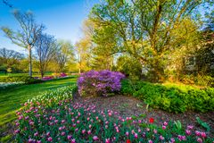 Colorful flowers and trees at Sherwood Gardens Park in Guilford, Baltimore, Maryland stock photos