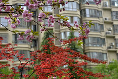 Colorful flowers and trees stock images
