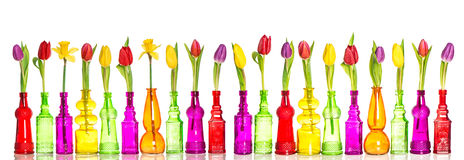 Colorful flowers tulips and daffodils in glass bottles Royalty Free Stock Photography