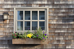 Colorful flowers under window on shingled house Stock Photos