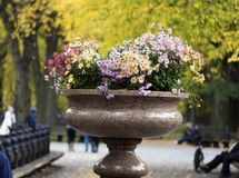 Colorful flowers in an urn in Central Park Manhattan. New York, yellow green background Stock Photography