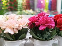 Colorful flowers in a vase are beautiful royalty free stock photography