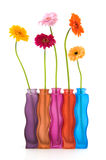 Colorful flowers and vases Stock Images