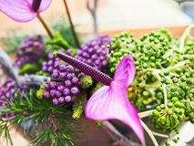 Colorful. Flowers with violet color Stock Images