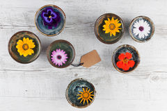 Colorful flowers in water Stock Image