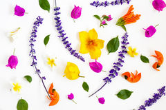 Colorful flowers on white background Stock Image