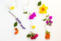 Colorful flowers on white background Stock Photos