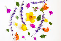 Colorful flowers on white background. Colorful flowers on white  background Stock Image