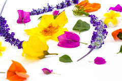 Colorful flowers on white background Royalty Free Stock Images