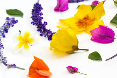 Colorful flowers on white background Stock Images
