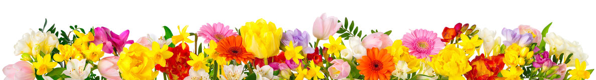 Colorful flowers on white in banner format Stock Photos