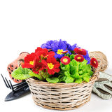 Colorful flowers in wicker basket Stock Photography