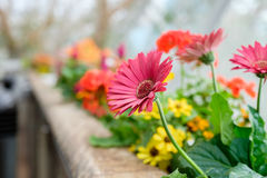 Colorful flowers. On a window side Stock Images