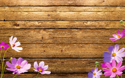 Flowers on wood. Colorful flowers on wood Texture Royalty Free Stock Image