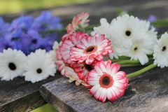 Colorful flowers on wooden plank Royalty Free Stock Images