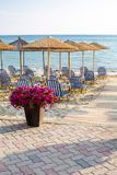 Colorful flowers and wooden umbrellas at sandy beach Royalty Free Stock Images