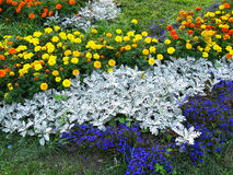 Colorful flowers. Yellow, orange and blue flowers. Flowerbed. Nature Royalty Free Stock Photos