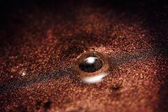 Colorful Fluid Make-up Paint with brown Particles Stock Photo