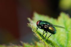 Colorful fly Stock Photo
