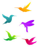 Colorful flying hummingbirds Stock Photo
